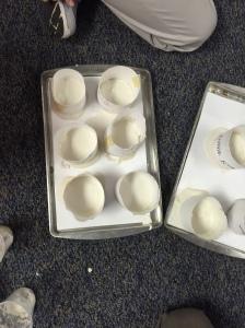 Mr. Berry's 6th Grade Science